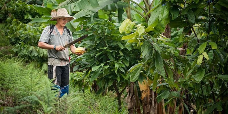 Ein junger Mann hält in einem Kakaoanbaugebiet Kolumbiens eine Machete in der Hand, um eine Kakaofrucht zu zerteilen.