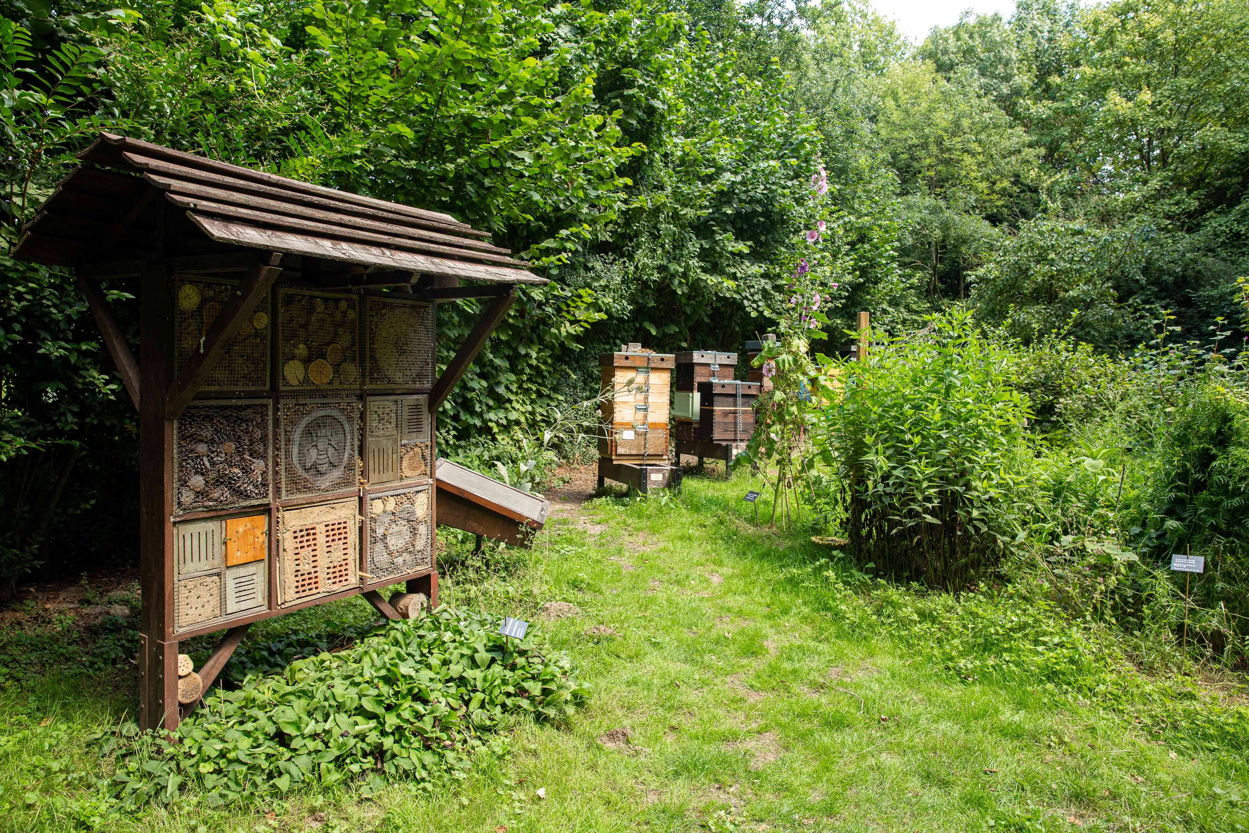 bee garden with the insect hotel