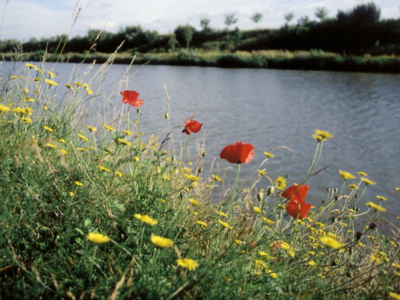 Wilde Mohnblumen am Mittellandkanal