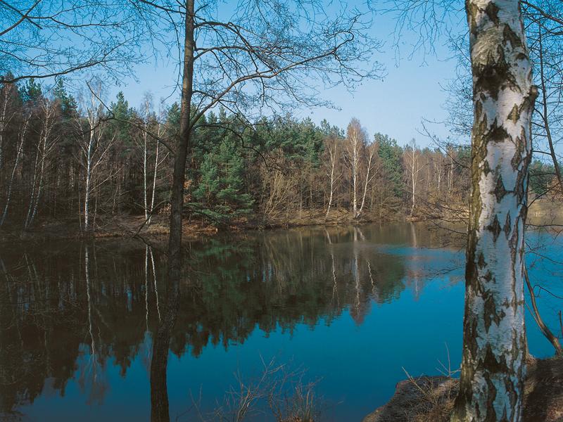Dunkleblau erscheinender See mit Birken im Vordergrund, im Hintergrund Nadelbäumer