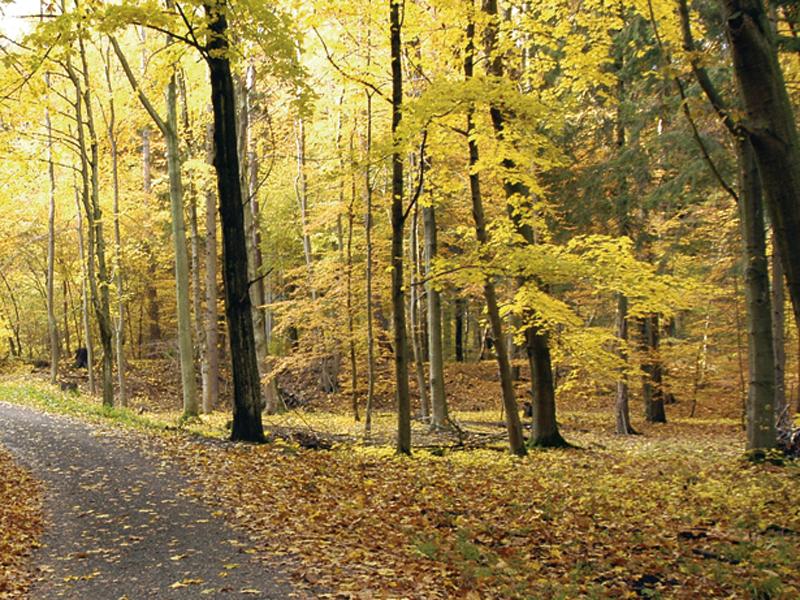 Laubwald im Herbst, im Hintergrund ein Hügel