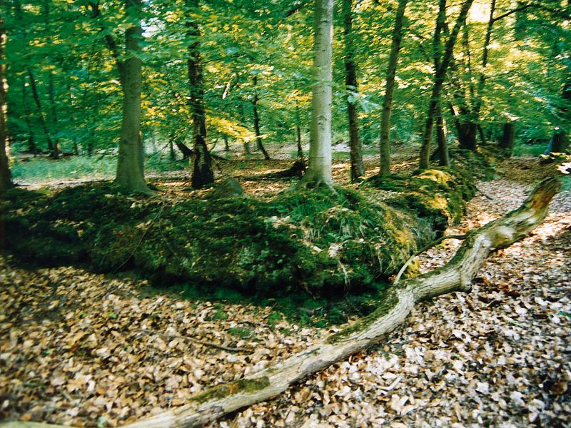Mit Moos überwucherter Wall in einem Laubwald