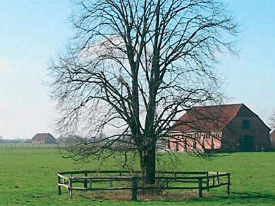 Ein Baum auf einer Weide, der von einem Holzzaun umgeben ist
