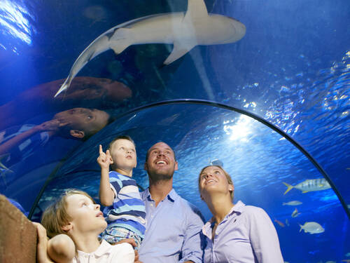 Sea Life Familie 2