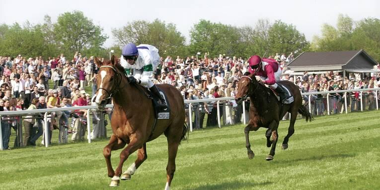 Pferderennen Langenhagen