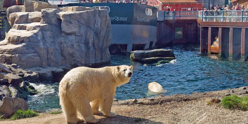 zoo hannover gutschein oktober