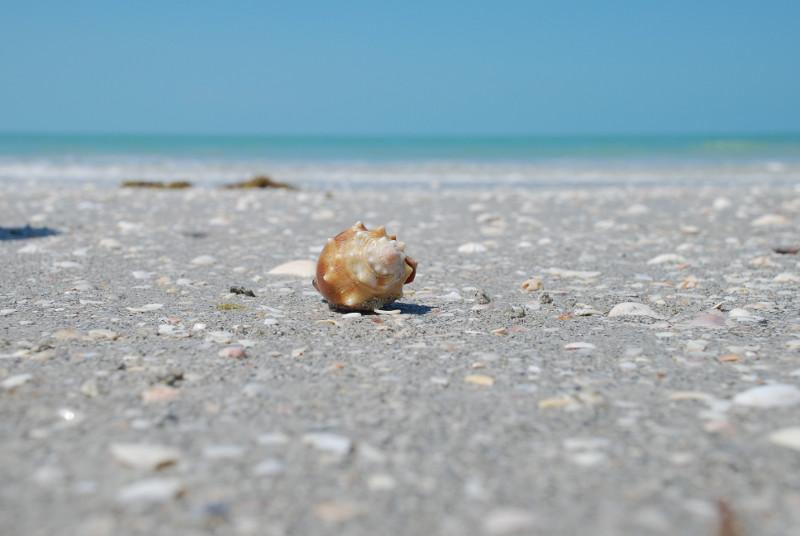 Nahaufname einer Muschel am Strand, im Hintergrund grünliches Meer und blauer Himmel