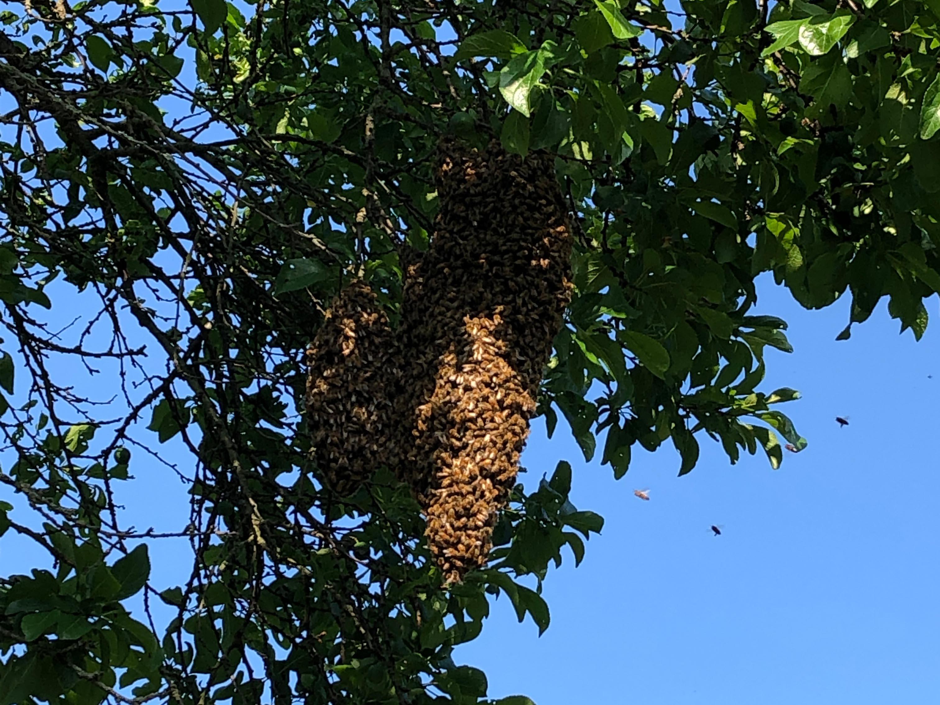 Bienenstock an einem Baum.