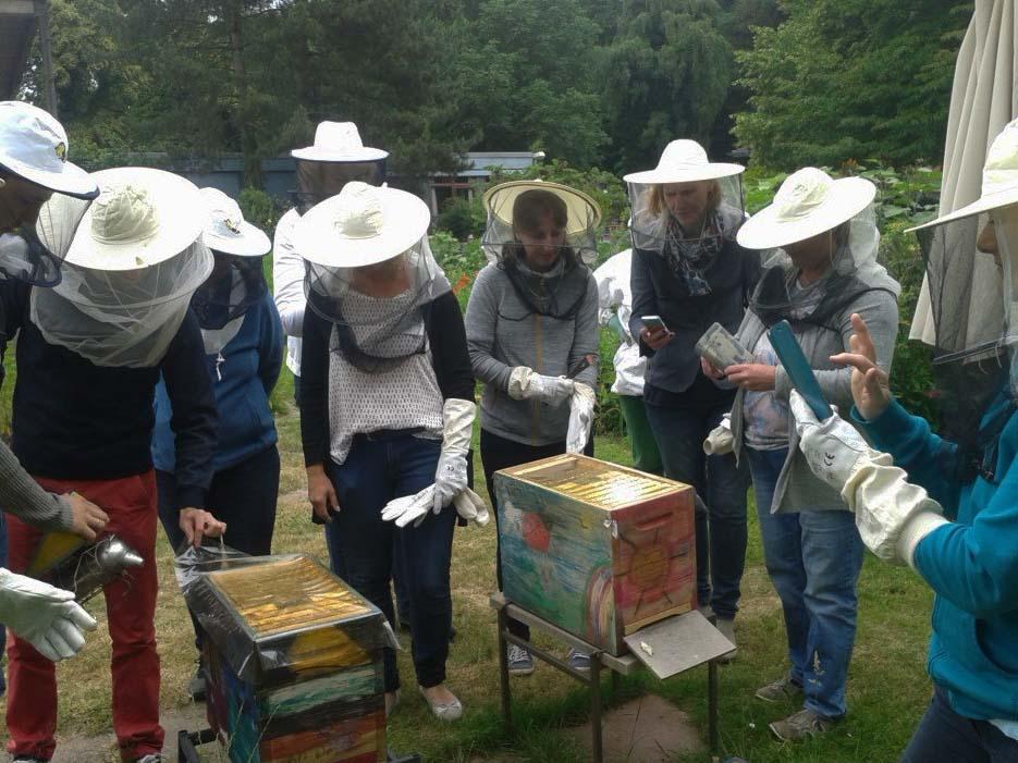 Lehrkräfte an Bienenkästen.