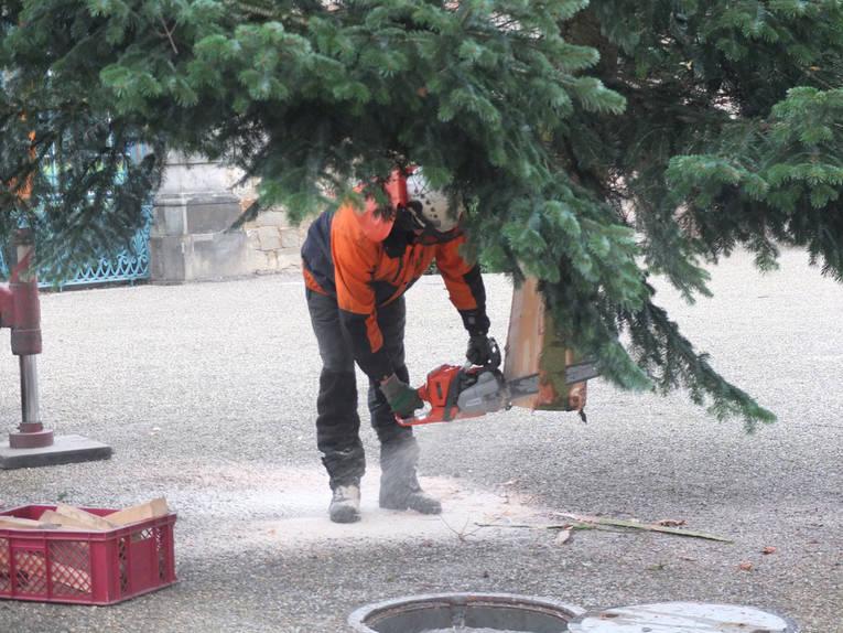Weihnachtsbaum hannover herrenhausen