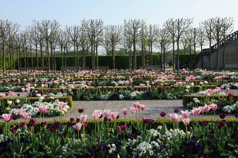 Blumengarten Bilder fürstlicher blumengarten saisonauftakt der herrenhäuser gärten presse herrenhausen