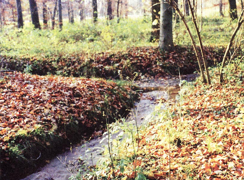 Bach im Seelhorster Forst