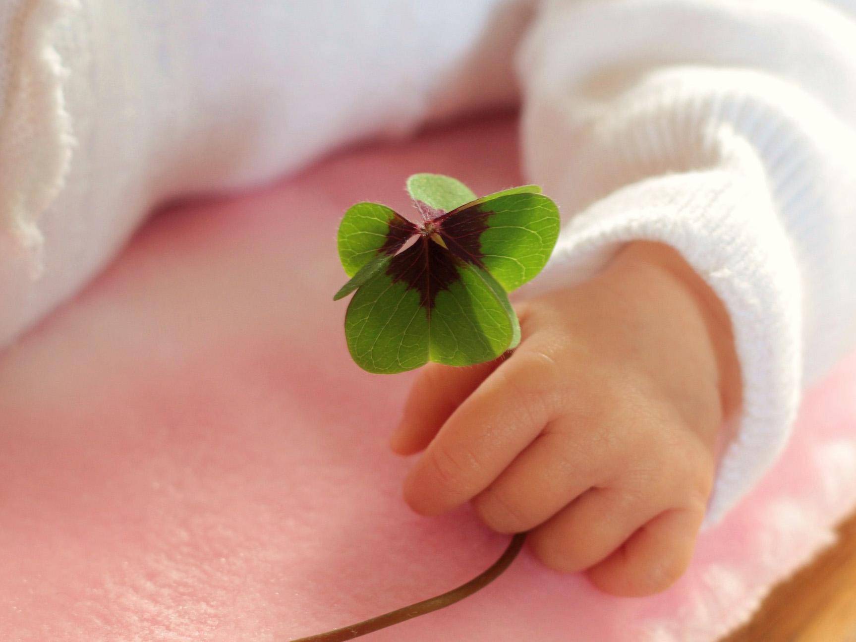 Eine Babyhand, die ein Kleeblatt hält