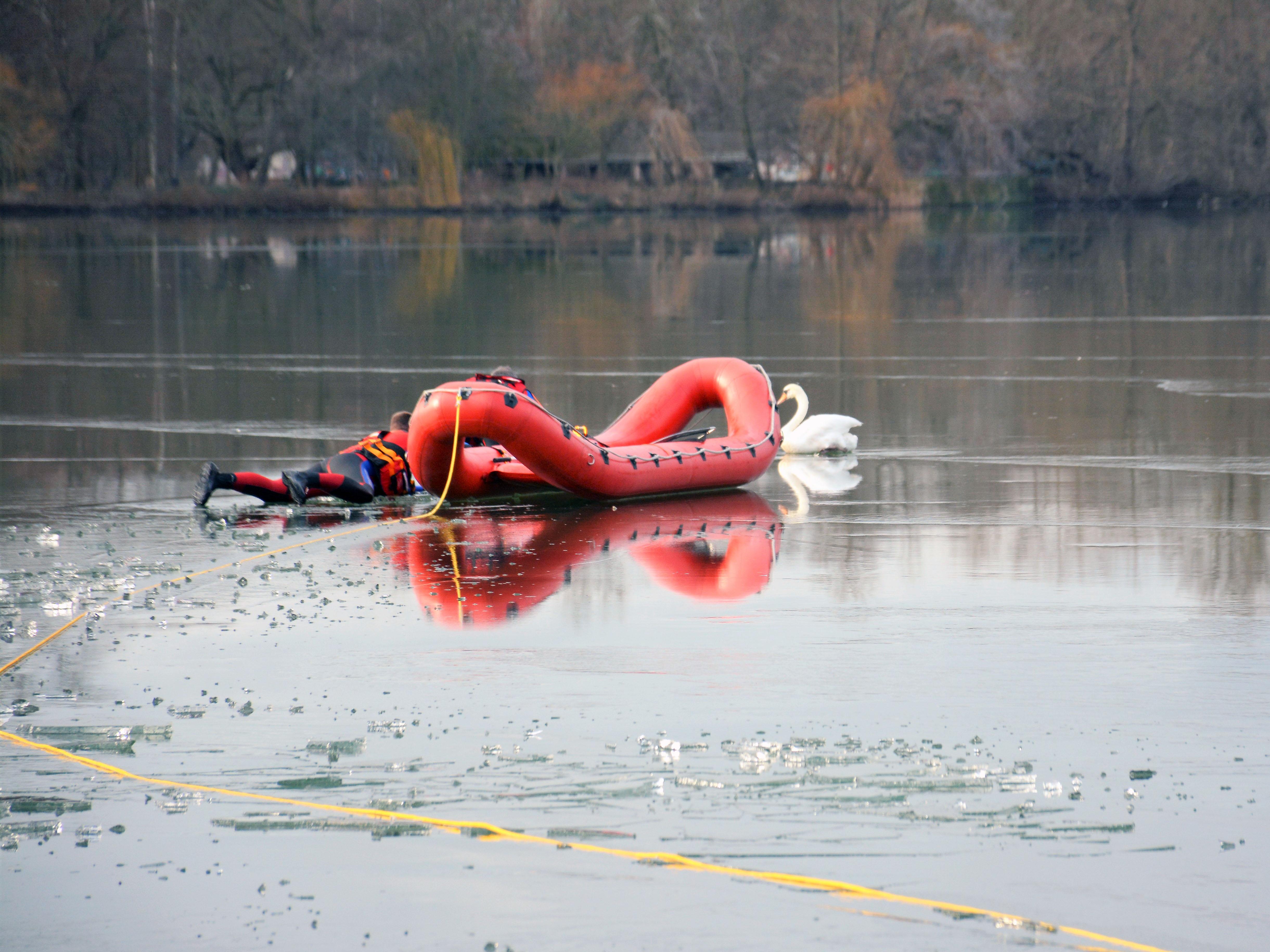 Ein entkräfteter Schwan musste von speziell ausgerüsteten Wasserrettern der Feuerwehr von einer Eisfläche auf dem Maschsee gerettet werden.