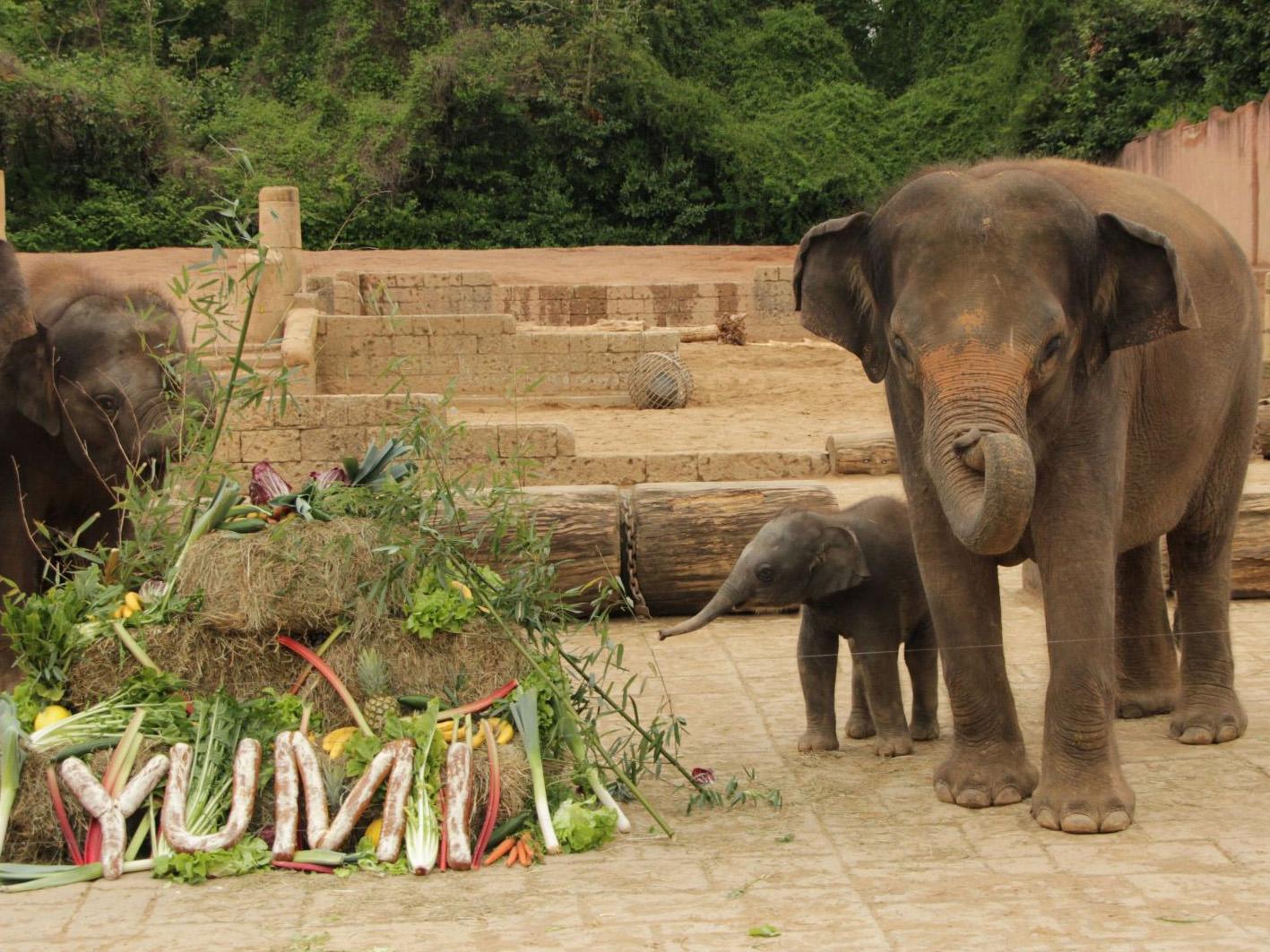 Zwei Elefanten vor einem Buffet.