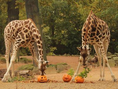 zoo hannover stimmt auf halloween ein. Black Bedroom Furniture Sets. Home Design Ideas