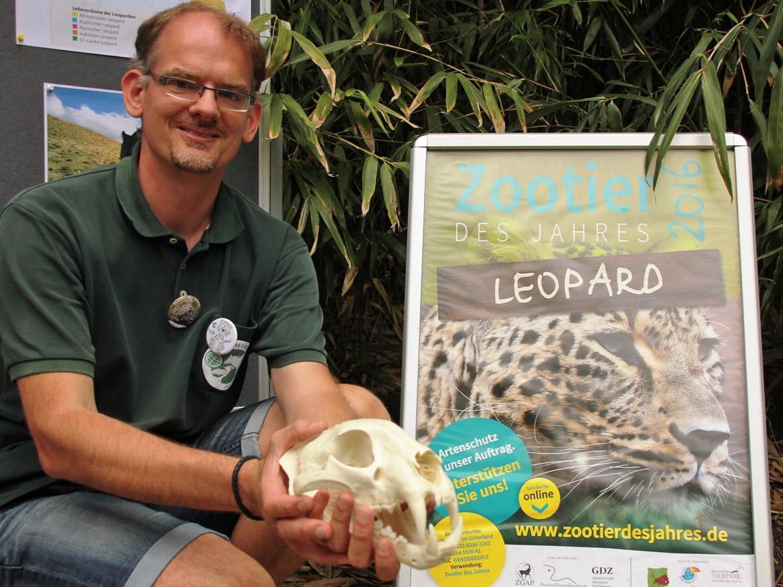Mann, der eine Leopardenschädel-Nachbildung erklärt.