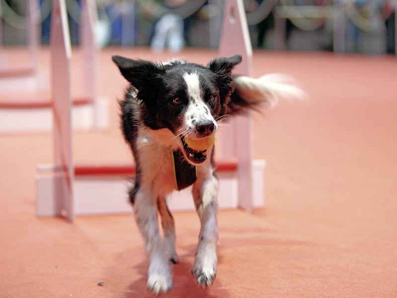 Hund co messen kongresse veranstaltungskalender
