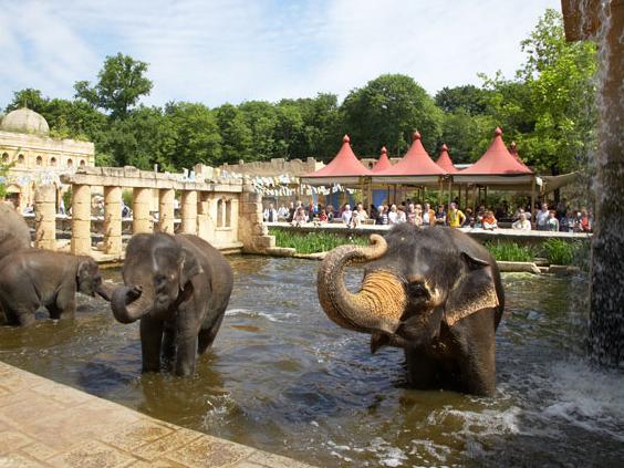 Elefanten im Wasser.