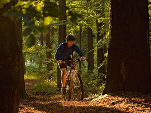 Mountainbiking in der Region
