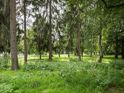 Eine Wildnis-Fläche.