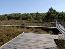 Moorlandschaft mit einem Holzsteg der durch das Moor führt.