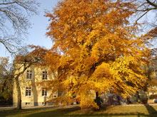 Laubbaum im Herbst in einer parkähnlichen Umgebung. Im Hintergrund ist die Seitenansicht eines Gebäudes zu sehen welches eine gelbe Fassade hat.