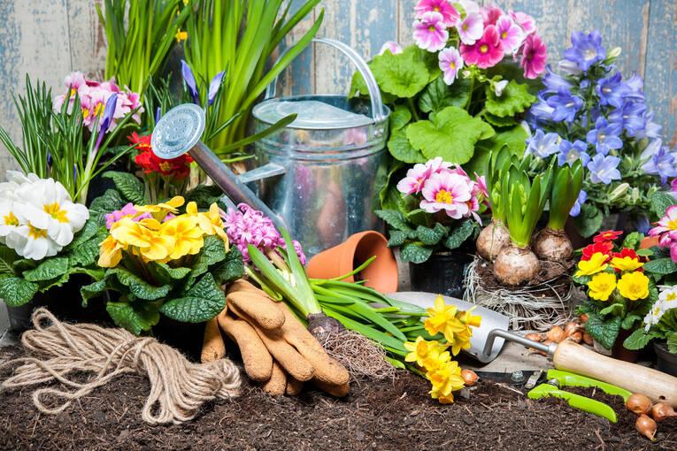 Fruhlingsblumen Pflanzen Tipps ? Bitmoon.info Fruhlingsblumen Pflanzen Tipps